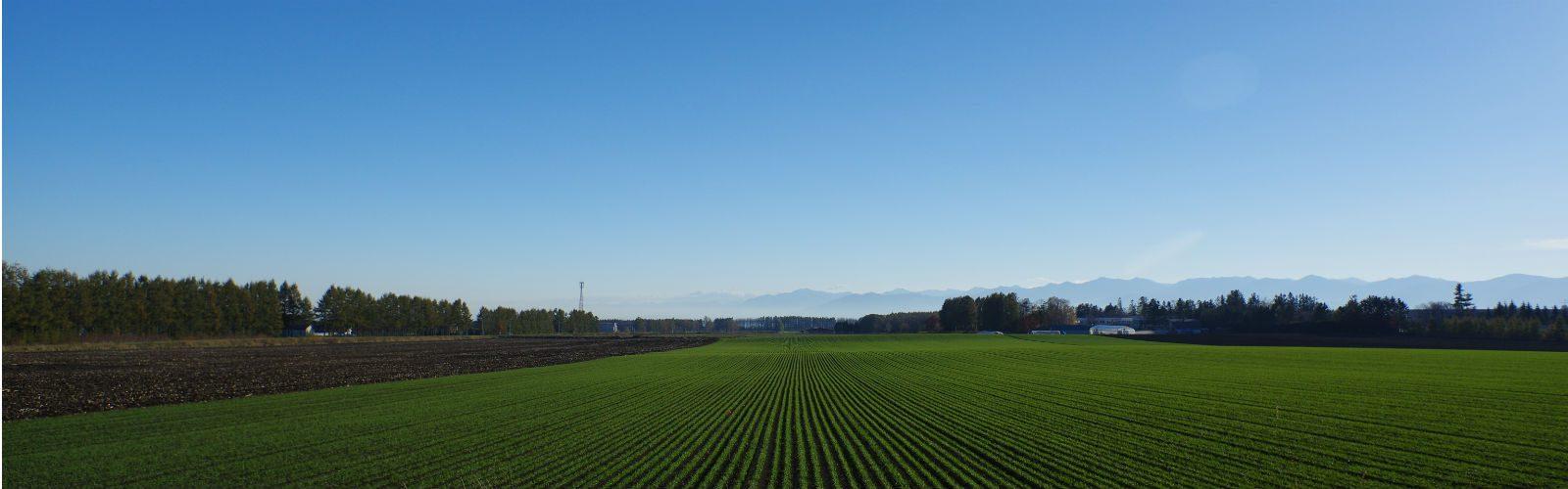 Tokachi Plain